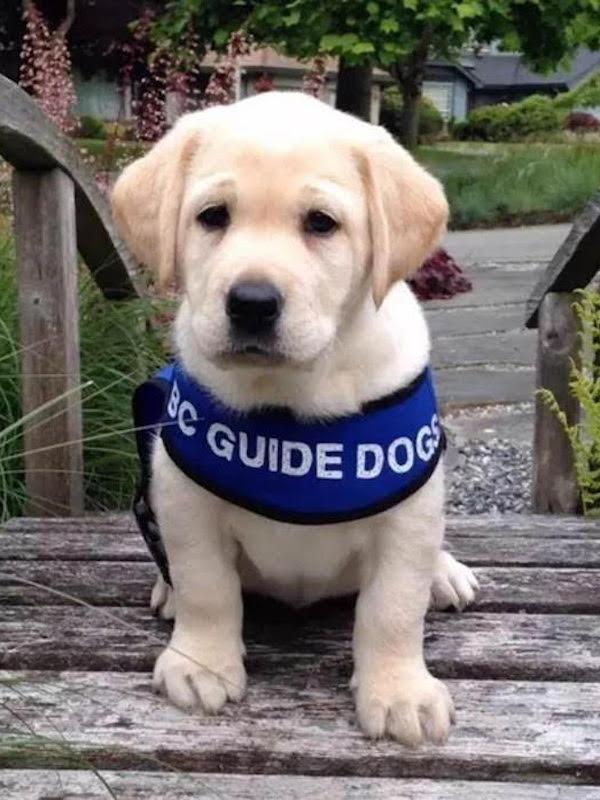 Día Internacional del Perro Guía 2021