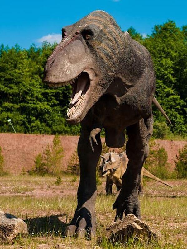 La mandíbula del T. rex, el misterio se acabó