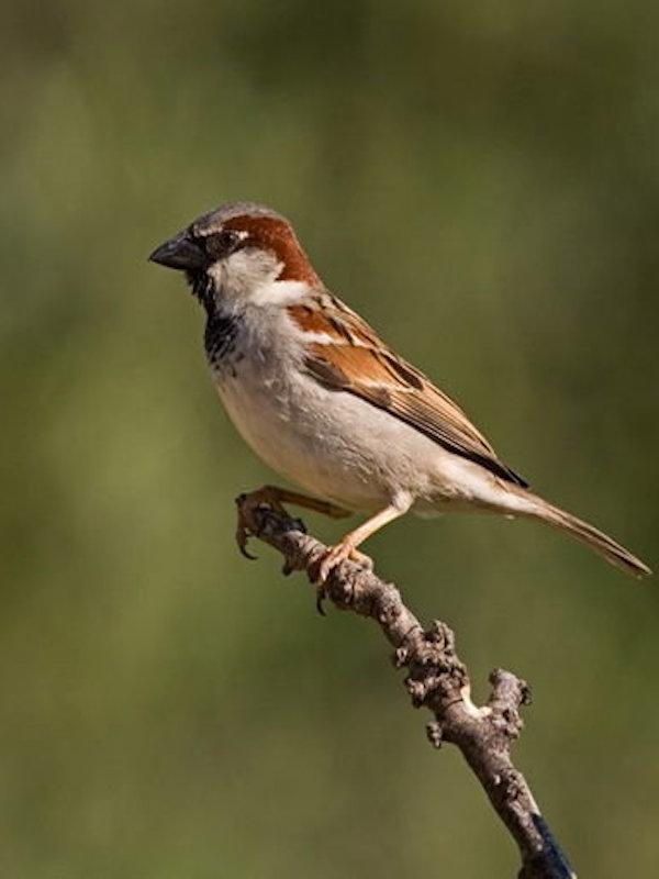 Las especies de aves se encuentran en una situación desfavorable