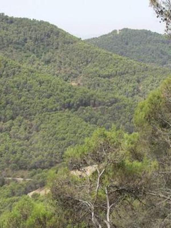 Andalucía y 14 ayuntamientos colaboran en materia forestal