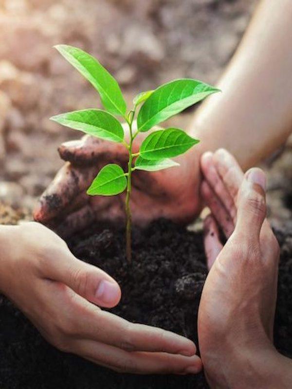 Cádiz abre plazo para solicitar los programas de educación ambiental del curso 2021-2022