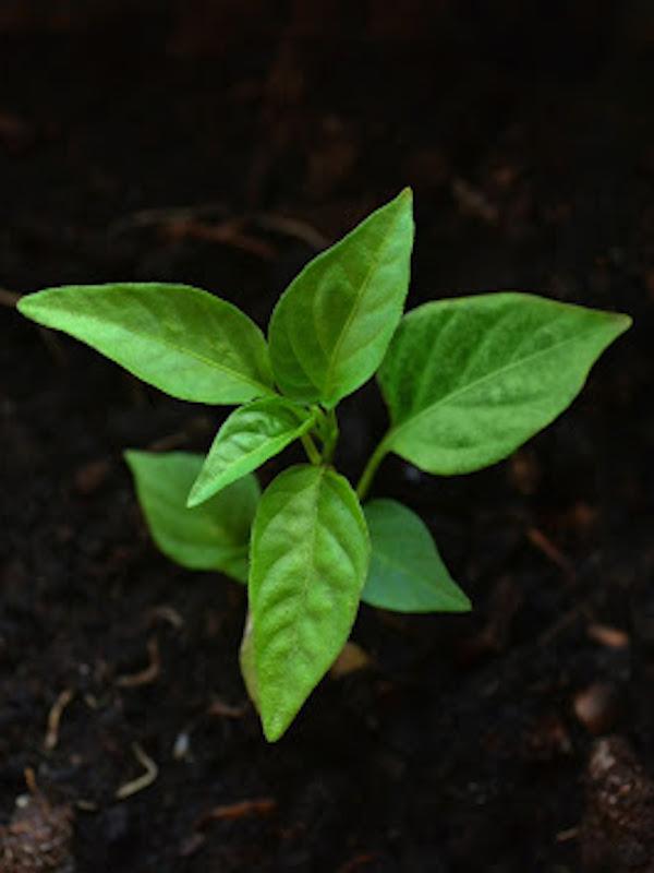 Servalesa 'apuesta' por la agricultura ecológica por CAAE