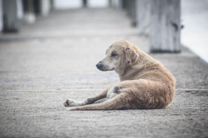 Cada hora se abandonan en España 15 perros sin identificar, según la Real Sociedad Canina