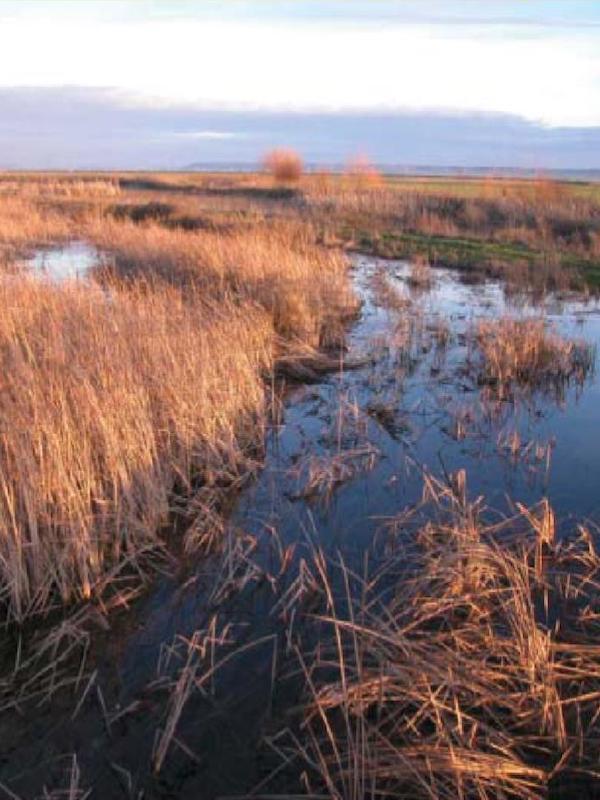 Los humedales Ramsar siguen amenazados por la mala gestión del agua