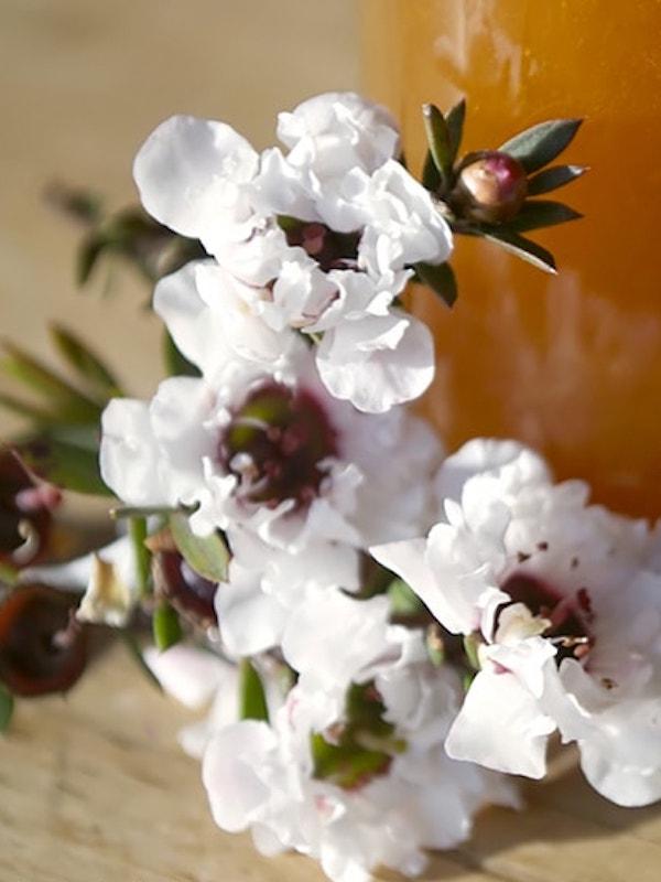 Miel de Kanuka y miel de Manuka, el superalimento que debes conocer