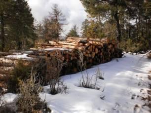 Indecente tala abusiva de árboles en la Serranía de Cuenca