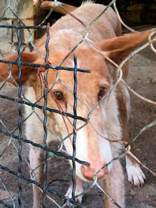 Generalitat de Catalunya 'Donde dije digo, digo Diego' denunciada por presunto incumplimiento de la normativa que protege a los perros de los cazadores