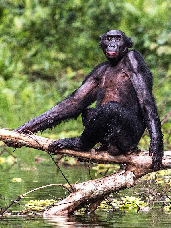 Algunos animales salvajes también guardan 'distanciamiento social' para no contagiarse