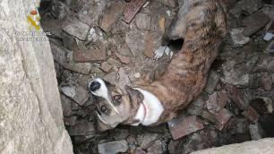 El SEPRONA rescata a una perra de un pozo abandonado en San Juan del Puerto (Huelva)