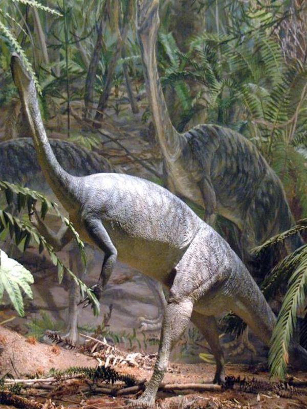 Los dinosaurios fueron de Sudamérica a Groenlandia gracias a menos CO2