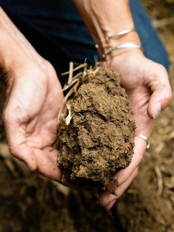 Informe sobre 'El estado de conocimiento de la biodiversidad del suelo'