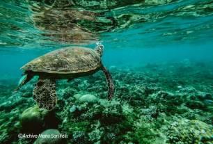 Nace Santander for the Seas, un proyecto para conservar mares y océanos
