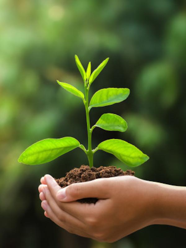 WWF, SEO/BirdLife, Ecologistas en Acción, Greenpeace y Amigos de la Tierra, llamado el G-15, recibe información  sobre el 'Plan de Recuperación'