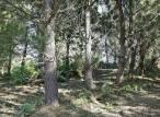 Lentitud en la aprobación del 'Plan forestal de Galicia'