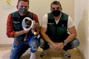 Un 'niñato' de 19 años detenido por maltratar a un perro en su piso de Altea