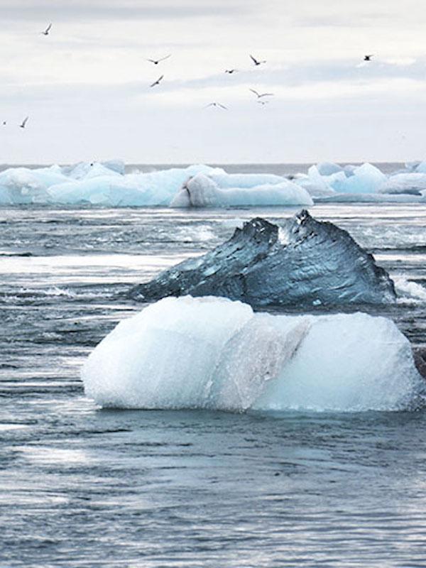 Las consecuencias biológicas del cambio climático