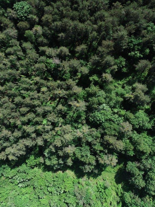 Los árboles del límite del bosque podrían ser menos sensibles al cambio climatico