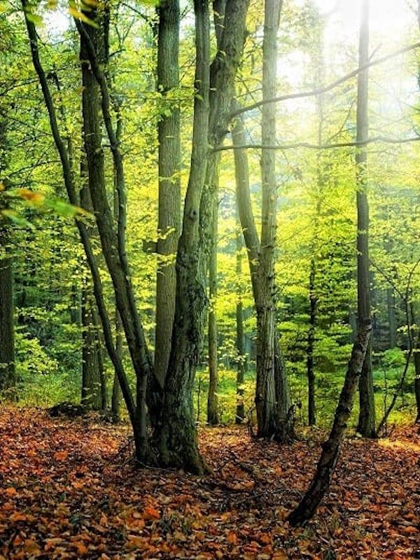 El viento, los incendios y las plagas de insectos 'asolan' los bosques de Europa