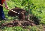 La 'Campaña de Plantación de árboles y arbustos en Logroño', manifiestamente mejorable