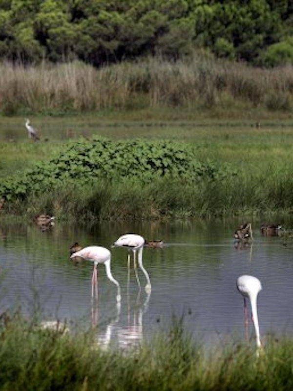 Europa sancionará a España por la degradación del Delta del Llobregat