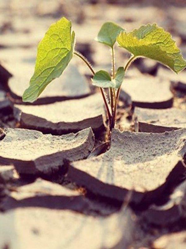 Acusan 'con argumentos' de la falta de protección del clima