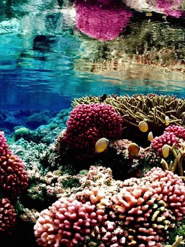 Naturaleza, las olas de calor marinas provocan cambios permanentes en la expresión génica de los peces