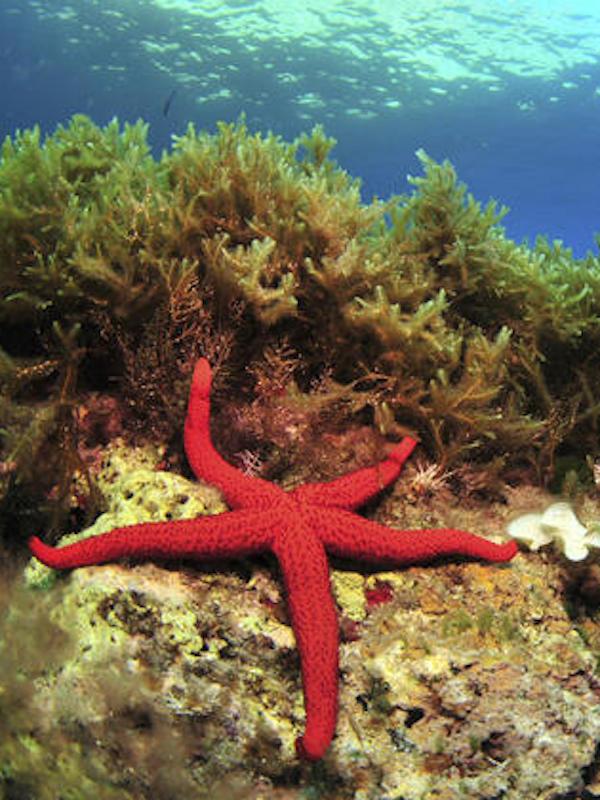 Naturaleza, las estrellas de mar 'lo tienen crudo'
