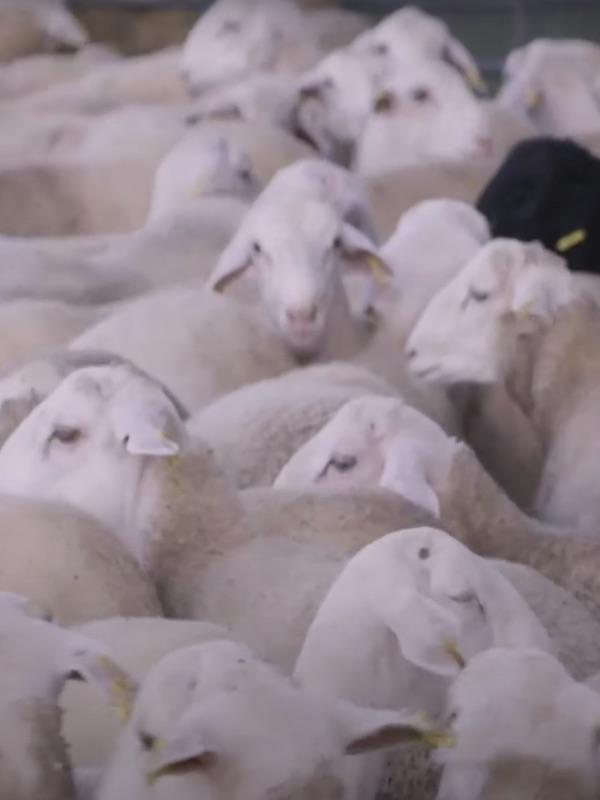 Repaso de 'IGUALDAD ANIMAL' en 2020 (video)