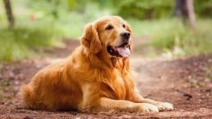 Respuestas a la rápida domesticación de los perros
