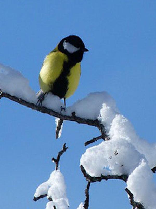 Te contamos cómo ayudar a las aves durante la ola de frío
