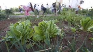 Sevilla desaloja los huertos sociales de Torreblanca