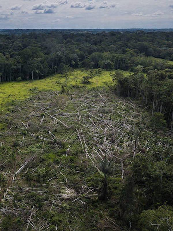 España 'apuesta' por reforzar la cooperación europea contra la deforestación