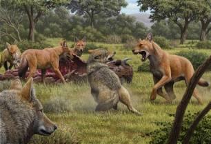 Logran secuenciar el ADN del lobo gigante