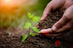 PSN de Pamplona pide una campaña de plantación de arbolado y clausurar alcorques que no puedan acoger nuevas especies