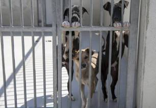 El centro de protección animal de la DPZ atiende a 164 perros recogidos en la provincia durante el pasado año