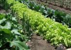"""El huerto 'ecológico' es una herramienta transformadora de nuestro bienestar y el de nuestro planeta"""""""