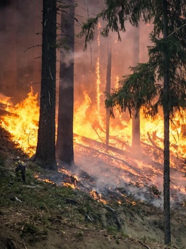 La Rioja estudia la relación de los incendios forestales y la despoblación rural