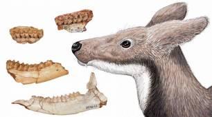 La dieta del ciervo almizclero extinto revela por qué dos grupos de primates del Mioceno no convivieron