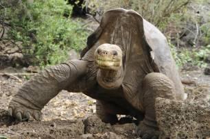 El secreto de las Islas Galápagos para mantener su hábitats únicos