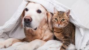 España sigue 'obviando' el cuidado de los animales