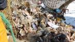 Implicando a las flotas pesqueras en la prevención y recogida de basuras marinas