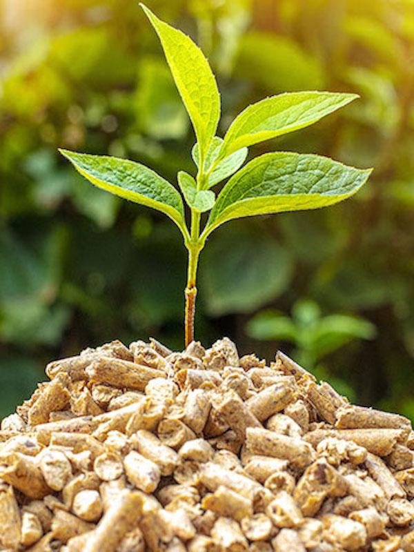 Europa dice que la biomasa es una alternativa de presente y futuro