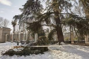 Filomena puede ser un 'revulsivo' para mejorar la biodiversidad de la ciudad de Madrid