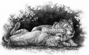"""Los fósiles de una familia de tigres dientes de sable revelan que tardaban en """"independizarse"""""""