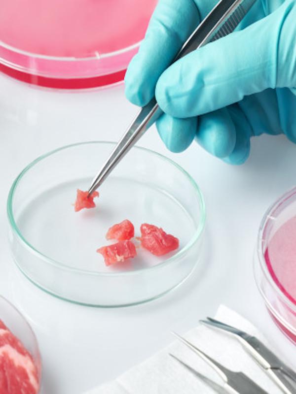 España financia la investigación de carne cultivada, para evitar el sacrificio de los animales