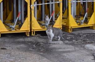 SEAT 'pasa olimpicamente' de los gatos de su fábrica de zona franca en Barcelona