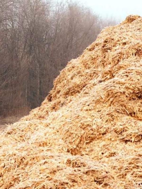Ceras sintéticas a través de biomasa y residuos, conoce la planta piloto de Greene