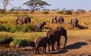 Contando desde el espacio elefantes dispersos en bosques y pastizales