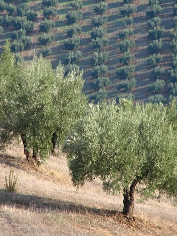 Andalucía gestionará más de 100 millones en ayudas para conservar la biodiversidad