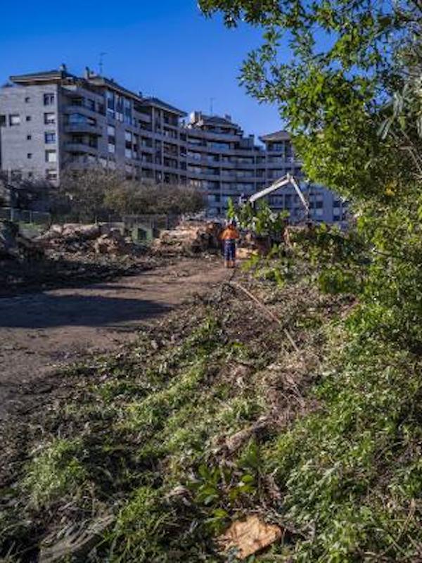 Cantabria. Laredo duplica la media nacional en arbolado urbano